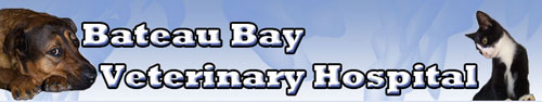 Logo for Bateau Bay Vet